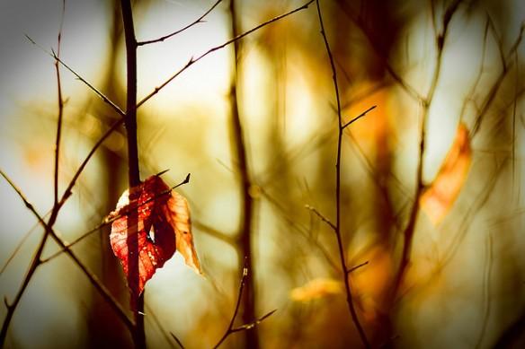 credits: harold.lloyd/flickr