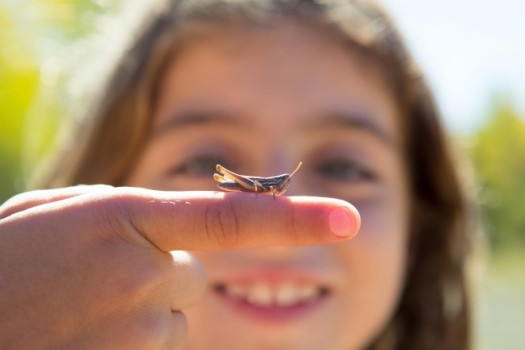 kid-hand-holding-grasshopper