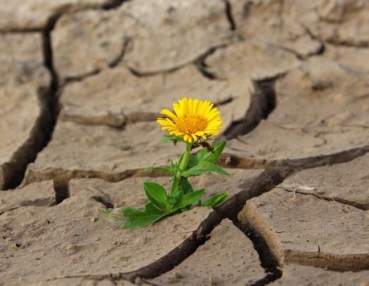 flower-1445316715pV2