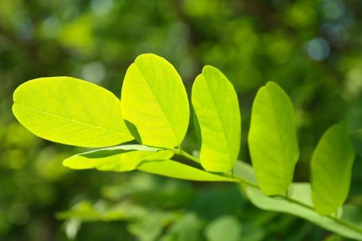 leaf-141494_1920