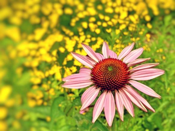 flower-832510_1920